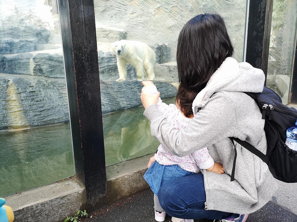 ホッキョクグマに手をふる子ども