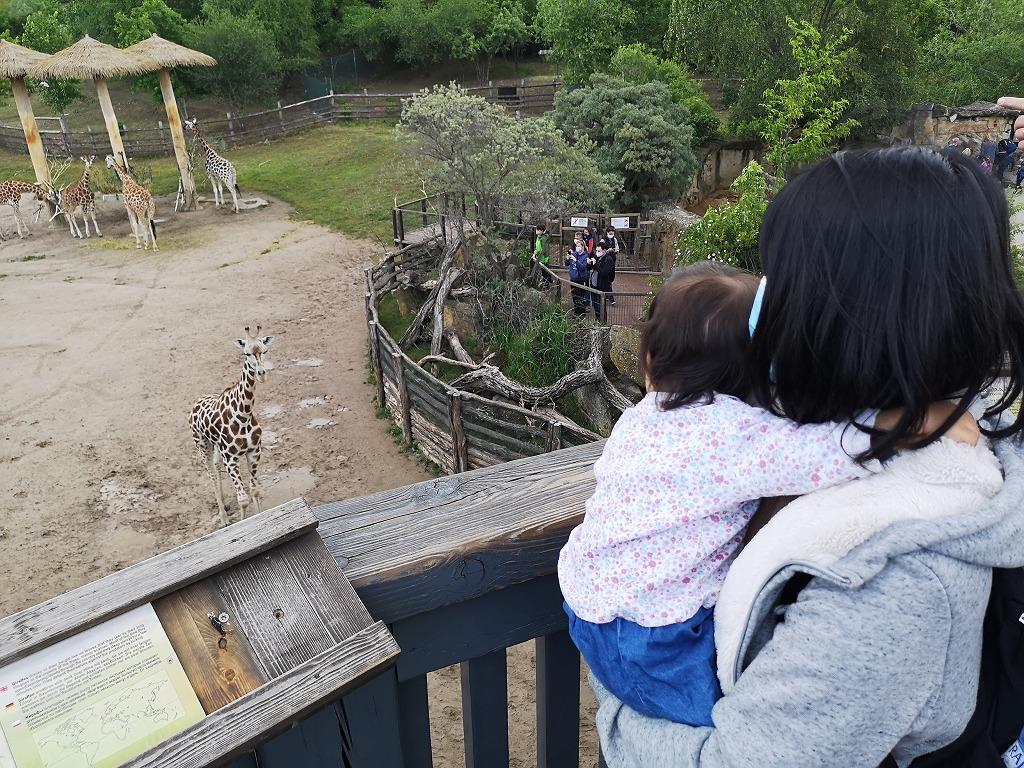 キリンを見る母と子ども